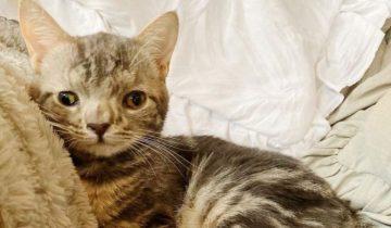 Хозяева отказались от «особенного» котенка и сдали его в приют