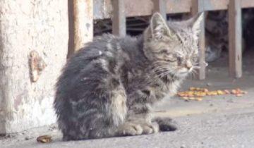 Бездомный котенок топтал лапками одеяло: он был слепым и не знал, что его ждет