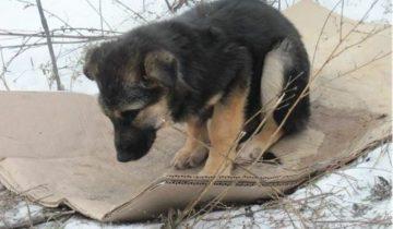 Люди выбросили щенка на улицу. Девушка нашла его и стала для него лучшим другом