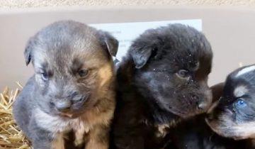 Зимой волонтеры приехали спасать собаку, но выяснилось, что от холода прячутся и ее малыши