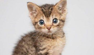 Маленький котенок размером с ладошку оказался один в этом мире