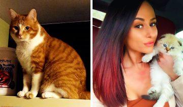 9-летний кот Мило начал страдать от депрессии и хозяйка решила завести еще одного котенка