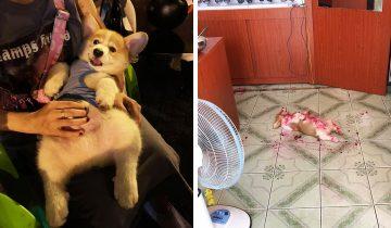 Хозяйка увидела щенка в луже крови, но испугалась она зря. У него все было под контролем
