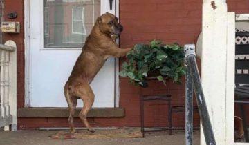 Песик видел, как владельцы собирают вещи и уезжают. Он так долго ждал их возвращения…