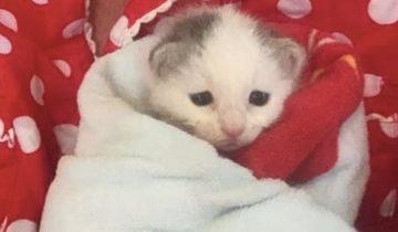 Из бревна послышался жалобный плач. Слепой котенок звал маму, но она так и не пришла