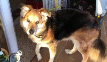 Бездомный пес увидел людей на лавочке и решил полежать рядом с ними, а в итоге получил новый дом