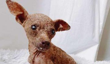 Облезлая больная собака напоминала жуткую мумию. Она дрожала при виде человека