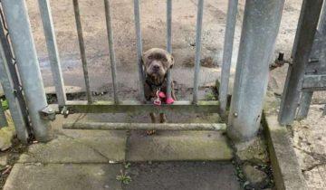 К воротам приюта привязали худую собаку. Бедняжка просунула мордашку сквозь прутья, в ее глазах была грусть