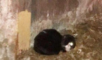 Работники метрополитена не поверили своим глазам: в туннеле сидел полуслепой котик