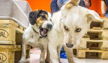 В городе Новосибирск открылось новое кафе «Dog House» и там живут бездомные песики