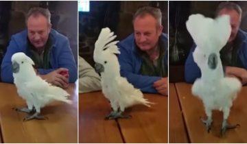 Этот попугай пустился в пляс, когда услышал любимую песню