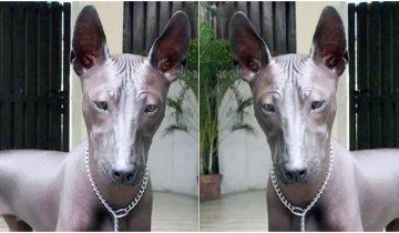 Девушка в сеть выставила фото своей собаки. Теперь пользователи спорят: это статуя или живой пес?