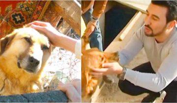 Парень спас 350 собак! Он находит бедняг на улице, выхаживает и помогает снова обрести веру в людей