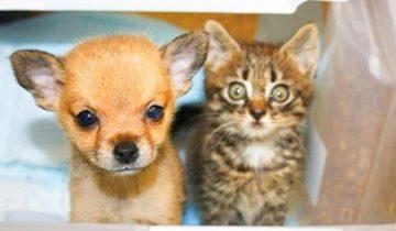 Настоящий друг в беде не бросит: котенок спас щенка и теперь они не разлучаются