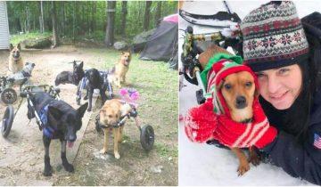 Девушка приютила 6 собак-инвалидов подарив им счастливую жизнь
