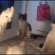 Попугай научился «говорить» по-кошачьи, чтобы выжить в доме среди котов