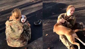 Хозяйка встретилась со своей собакой после 2 лет разлуки. Я плачу