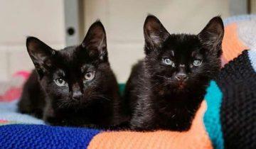 На улице лежали котята, дрожа от холода. Один из них обнимал лапками слепого братика, чтобы тот не замерз