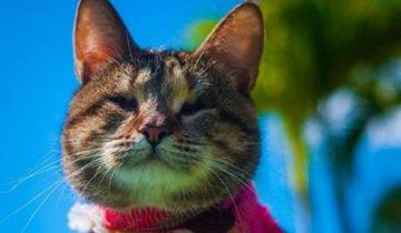 Незрячая кошка упала в сливную трубу. Ей повезло, что ее заметил добрый человек