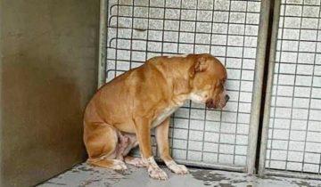 «Ты больше нам не нужен!»: владельцы бросили собаку, и убитый горем пес застыл