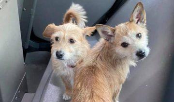 Двух собачек кто-то выбросил из дома и из своей жизни. Их чудом спасли