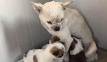 Бродячая собака прятала щенков в сливной трубе. Люди хотели ей помочь, но она не подпускала никого