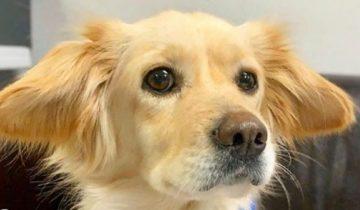 В грязном приюте жили 200 собак. Среди них была малышка, которая страдала от болезни