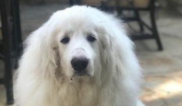 После жизни с жестоким хозяином пес оказался в больнице с тяжелой травмой
