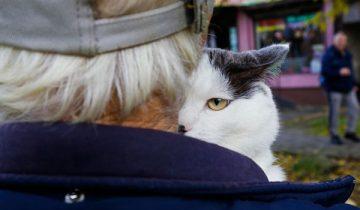 Автомобиль и полмиллиона рублей — такую сумму предлагают пенсионеру за его котика!