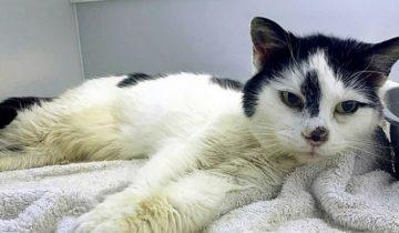 Девушка была уверенна, что ее кошки давно нет в живых, а мурлыка 11 лет голодала