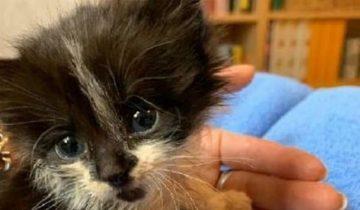 Маленького котенка бросили в грязном мешке. Он плакал и звал на помощь