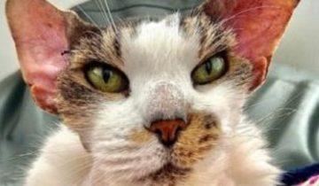 Старый худой кот оказался на улице, но его удалось спасти благодаря любви