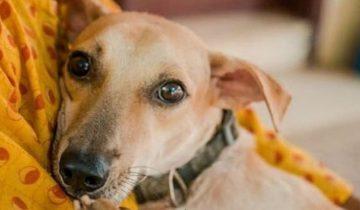 Пара выстрелов — и собаки замолчали навсегда. Лишь один песик выжил и в страхе прятался