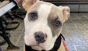 Крошечного щенка бросили в пустом здании. Он сидел в испуге, не веря, что его бросили