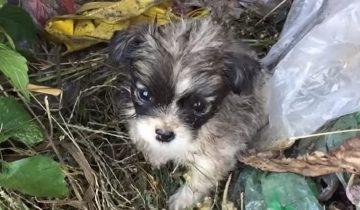 «Забери меня домой!»: в грязи и мусоре копошился маленький щенок, которого выбросили