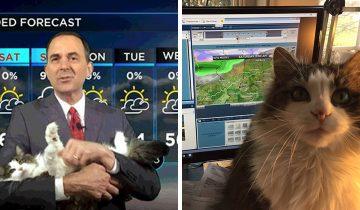 На карантине синоптик ведет прогноз погоды вместе с кошкой. Она — звезда эфира!