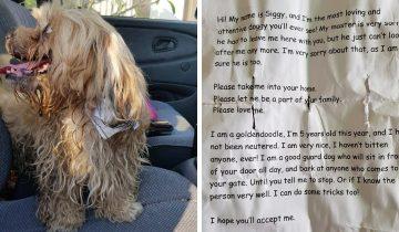 Парень спас собаку, на шее которой была записка. Там был не адрес хозяина, а его печальная история