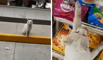 Хитрый бездомный котик заманил мексиканку в отдел товаров для животных, однако он получил не только корм