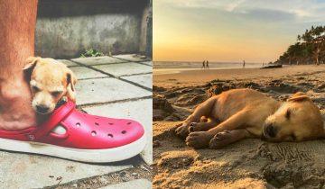 Пара туристов решили рискнуть и подобрать худого и больного щенка в трущобах Индии