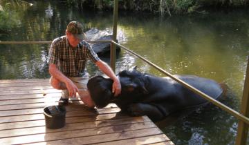 Мужчина спас жизнь гиппопотаму, а животное отплатило ему огромной любовью