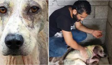 Мужчина забрал с улицы худого и больного пса и изменил его жизнь! Только посмотрите какой он сейчас красавец!