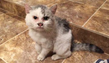 Слепой котик попал в машинное масло, но нашелся человек, который ему помог