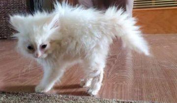 Девушка принесла в дом грязного котенка. Он не мог открыть глазки и нуждался в помощи