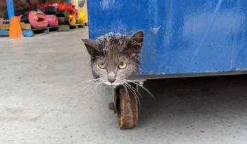 Кошачья мордочка торчала из мусорного бака. Животное было очень напуганно