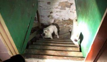 На холодном полу подвала лежала худая собака. Хозяин запер ее там и бросил
