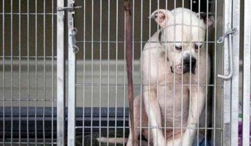 Огромный пес сидел прижавшись к стене и опустив морду. Хозяева сдали его в приют и его сердце было разбито