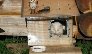 На дачу к людям пришел кот. Наевшись, он пропал через пять дней, но вскоре вернулся с бедой