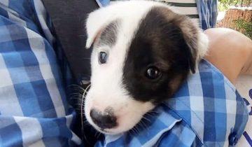 На улице бродил щенок, а на его шее висела табличка с надписью