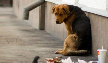 5 реальных способов помочь бездомным животным!