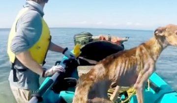 Мужчина спас собаку, которая оказалась на крохотном острове
